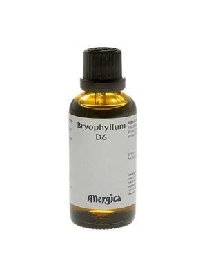 Bryophyllum D6