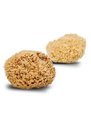 Natursvamp Honey Wool 13-14 cm