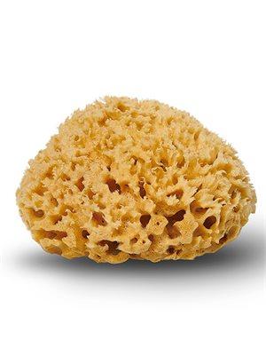 Natursvamp Honeycomb 10-11 cm